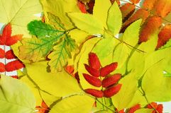 Colorful autumn foliage. View from above stock images