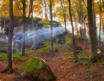 Colorful autumn forest Stock Photography