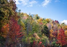 Colorful Autumn Forest Stock Photos