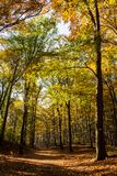 Colorful Autumn Forest. Autumn landscape with trees in the forest Royalty Free Stock Images