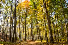 Colorful Autumn Forest. Path leading through the autumn forest on a sunny late afternoon Stock Images