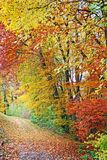 Colorful autumn forest Royalty Free Stock Images