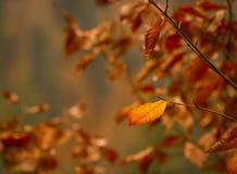 Colorful autumn Stock Photos