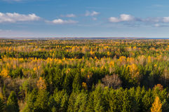 Colorful autumn forest against blue sky Stock Photos