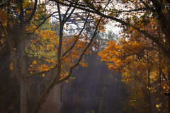Colorful autumn in the forest stock images