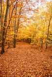 Colorful autumn forest with fallen leaves on hiking trail Royalty Free Stock Photography