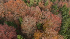 Colorful autumn forest stock video footage