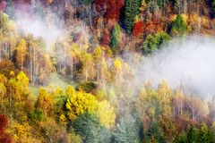 Colorful Autumn Forest. Fog An Trees Stock Photos