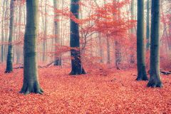 Colorful autumn forest. Colorful foliage in the foggy autumn forest Stock Photos