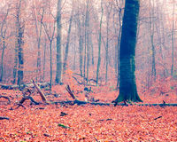 Colorful autumn forest Royalty Free Stock Photos