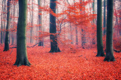Colorful autumn forest. Colorful foliage in the foggy autumn forest Stock Photo