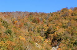 Colorful autumn forest. Georgian mountains covered with autumn forest stock images