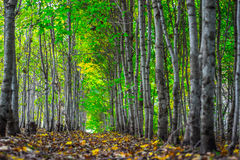 Colorful Autumn forest. Green alley Royalty Free Stock Image