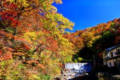 Colorful autumn forest in hot spring resorts of Nyuto Onsenkyo. Beautiful landscape view of colorful autumn forest with blue sky in hot spring resorts of Nyuto stock photo