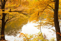 Colorful autumn forest and lake Stock Images