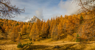Colorful Autumn Forest and Mountain-Dolomite,Italy Stock Photo