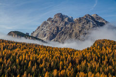Colorful Autumn Forest and Mountain-Dolomite,Italy Royalty Free Stock Photo