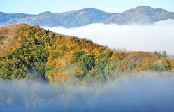 Colorful autumn forest mountain landscape Royalty Free Stock Images