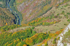 Colorful autumn forest mountain landscape Royalty Free Stock Image