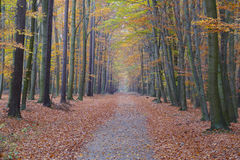 Colorful autumn forest path (T) Stock Images