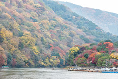 Colorful autumn forest and river in Arashiyama, Kyoto, Japan.  Royalty Free Stock Photos