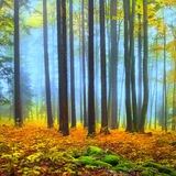 Colorful autumn forest scene Royalty Free Stock Image