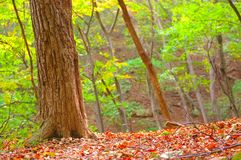Colorful autumn forest scene. Colorful scene of the vegetation in a forest in autumn Stock Photo