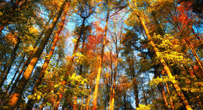 Colorful autumn forest scenery Royalty Free Stock Photos