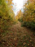 Colorful autumn forest trail landscape stock image