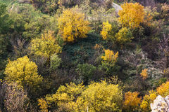 Colorful autumn forest Stock Photo
