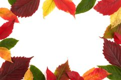 Colorful Autumn Frame Royalty Free Stock Photos