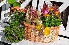 Colorful autumn garden Stock Image
