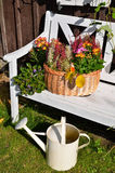 Colorful autumn garden Stock Photo