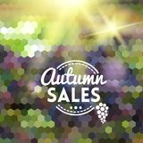Colorful autumn geometric background card. Colorful geometric background card with grape wine autumn sales Stock Image