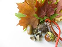 Colorful autumn gifts. Leaves, chestnuts and acorns Stock Photo