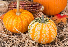 Colorful Autumn Gourds Stock Image