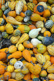 Colorful autumn gourds Stock Images
