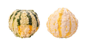 Colorful Autumn Gourds isolated with clipping path Royalty Free Stock Photo