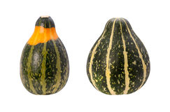 Colorful Autumn Gourds isolated with clipping path Stock Image