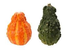 Colorful Autumn Gourds isolated with clipping path Stock Images