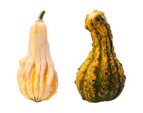 Colorful Autumn Gourds isolated with clipping path Royalty Free Stock Image