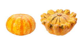 Colorful Autumn Gourds isolated with clipping path Royalty Free Stock Photography