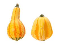 Colorful Autumn Gourds isolated with clipping path Royalty Free Stock Photos