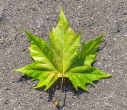 Colorful autumn green leaf lying on asphalt Royalty Free Stock Photos