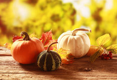 Colorful autumn harvest Stock Image