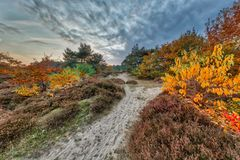 Colorful Autumn heathland landscape Royalty Free Stock Images