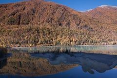 Colorful autumn of Kanas, Xinjiang Stock Image