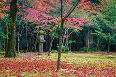 Colorful Autumn at Koto-in Temple in Kyoto Stock Image