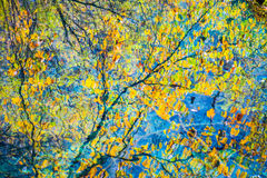 Colorful autumn on the lake Royalty Free Stock Photo
