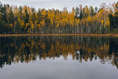 Colorful autumn lakeside treeline with reflection Stock Photography